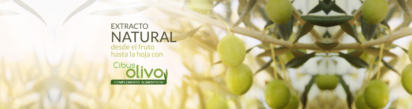 extracto natural desde el fruto hasta la hoja - cibusolivo